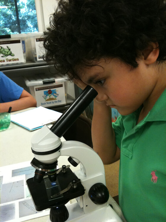 Plankton, Phytoplankton and Zooplankton at Deering Estate Eco Academy