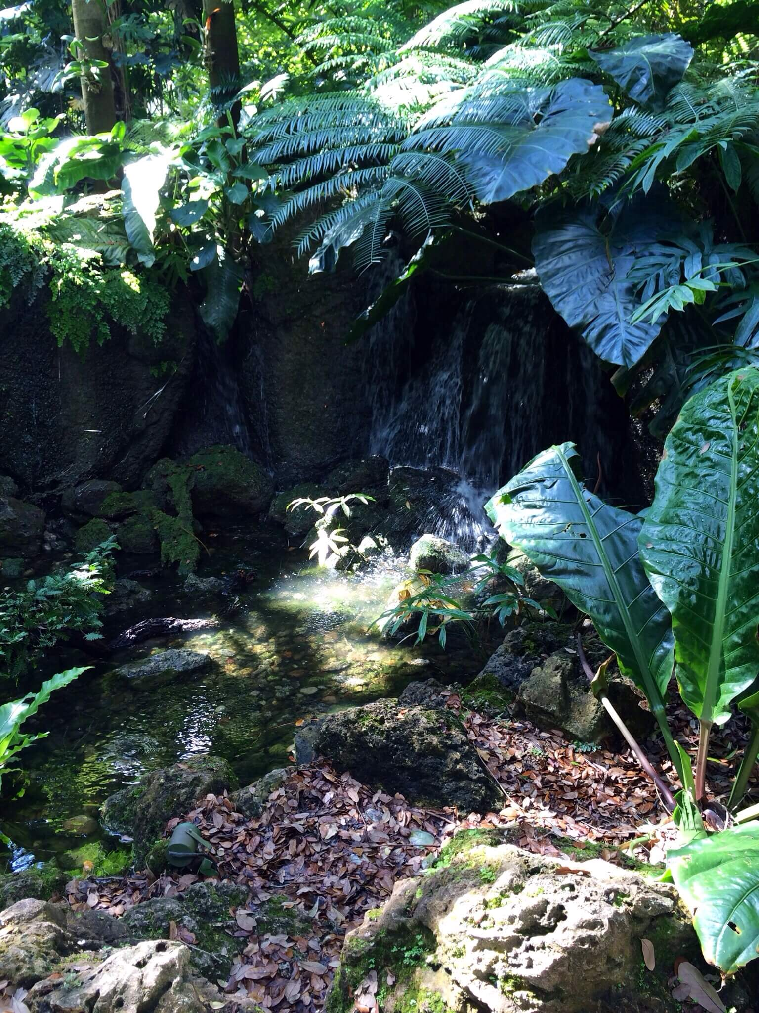 And here it is: the rainforest