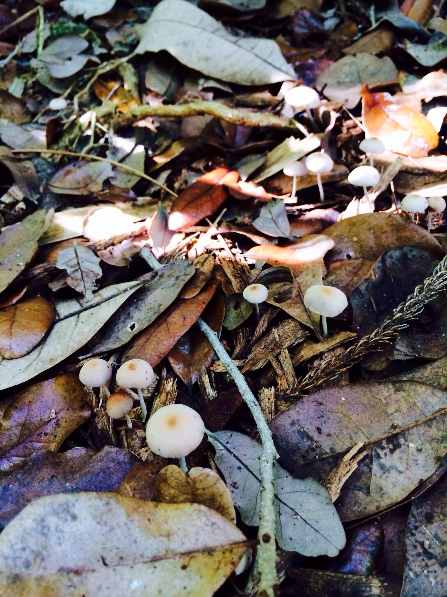 Mushrooms: one of the best kinds of decomposers