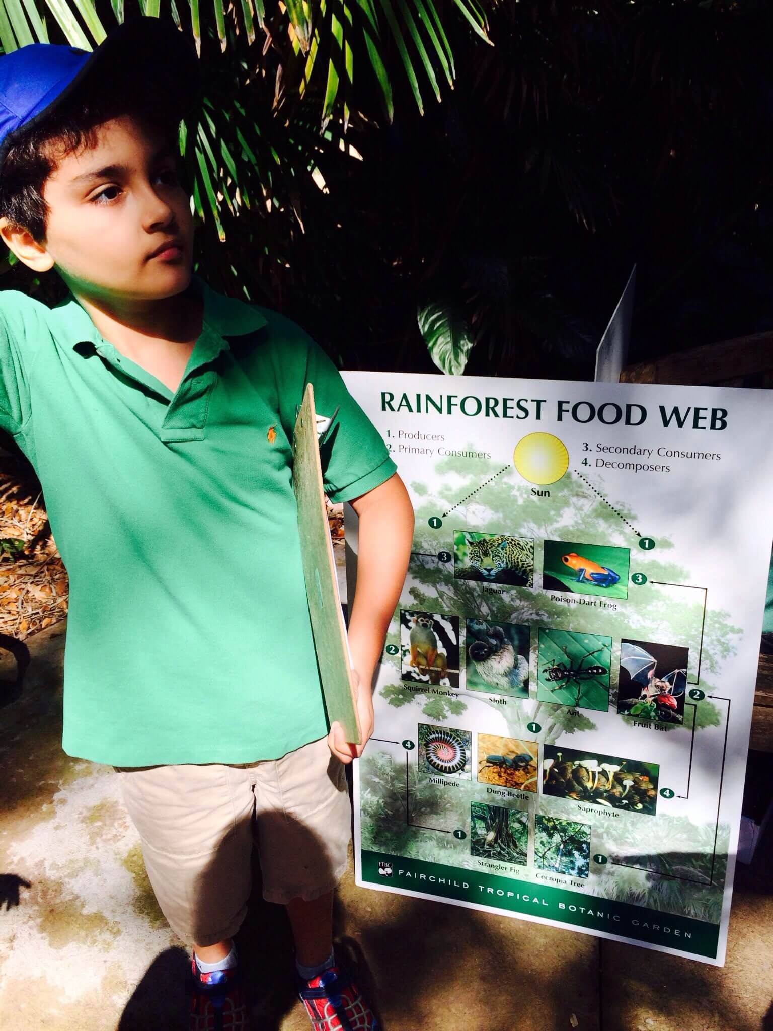 Playing a game to simulate the rainforest food web