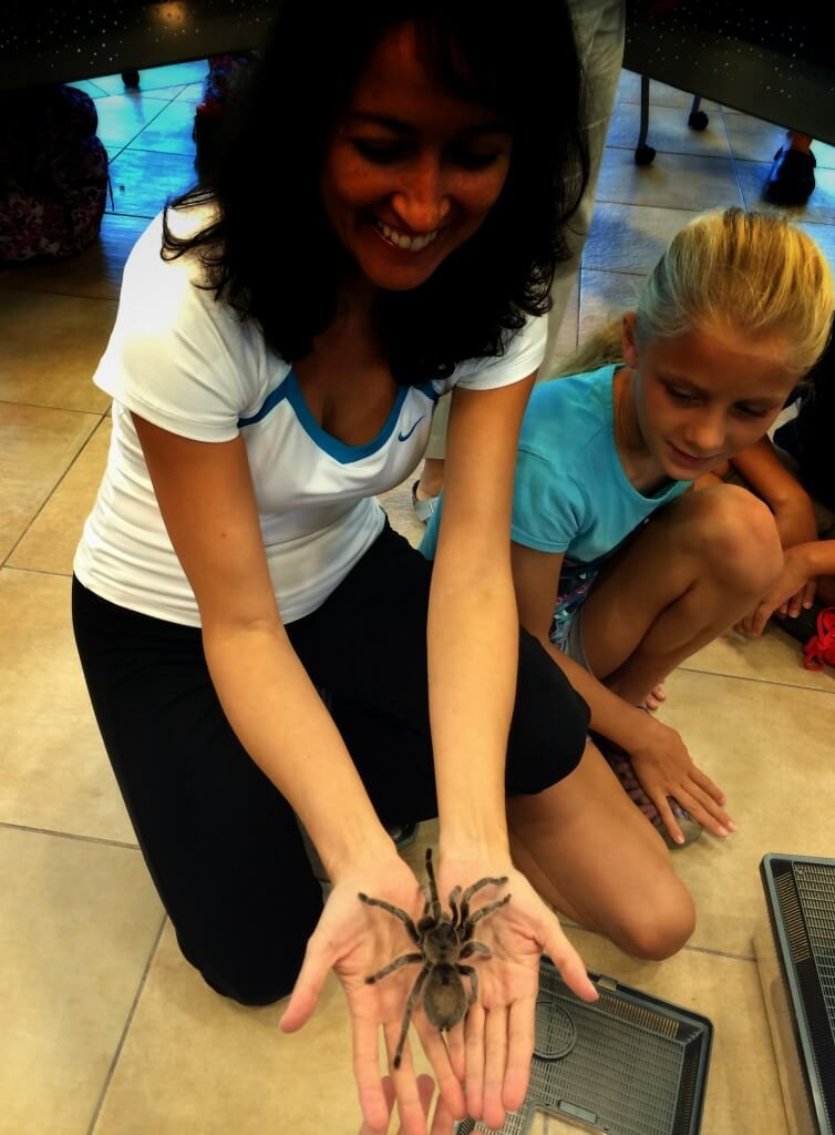 exotic animals in palmetto bay nature class - lucy the tarantula from Chile