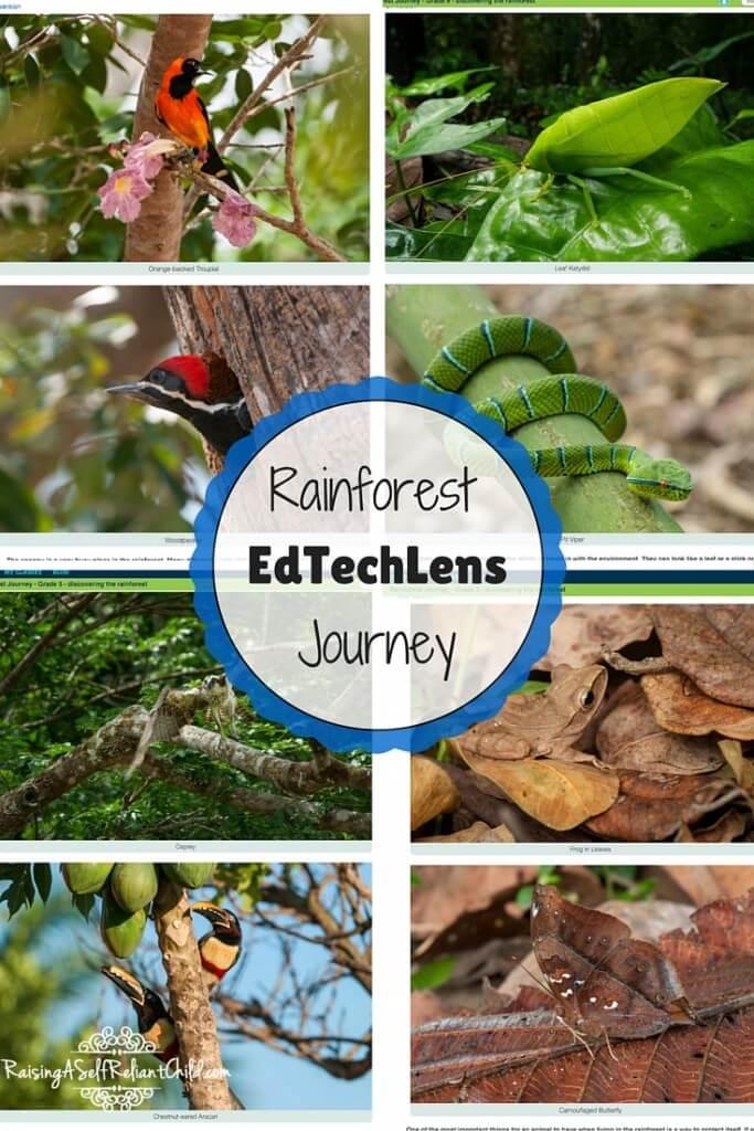 rainforest elementary lesson plans review